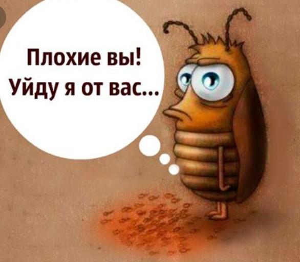 Днем рождения, прикольная картинка таракана