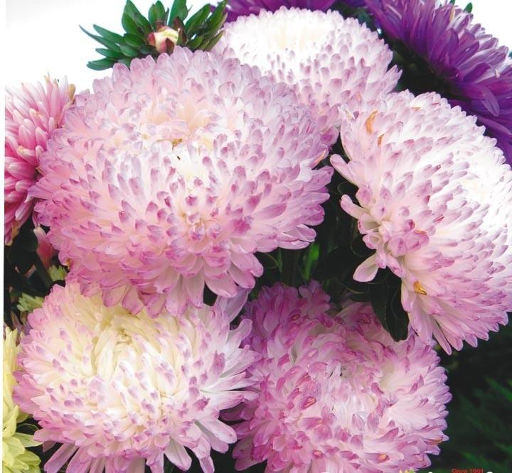 Цветы купить, цветы почтой в украине