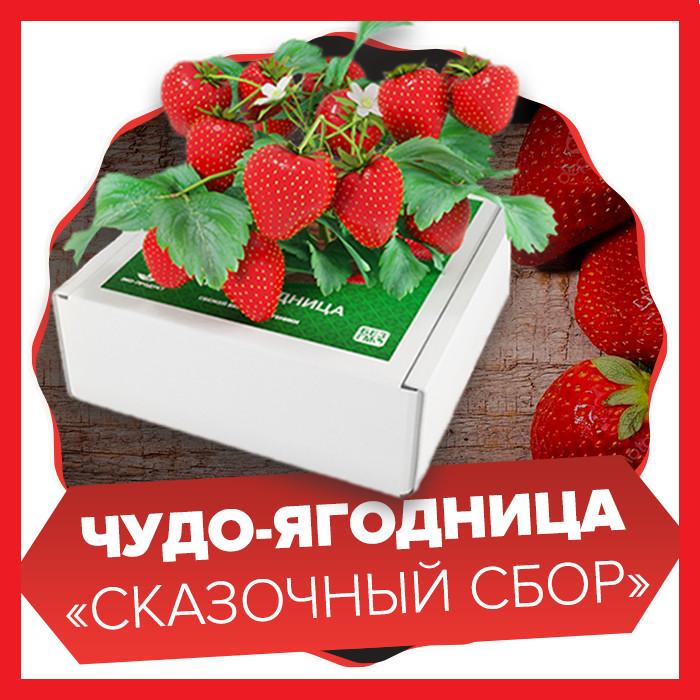 Чудо-ягодница Сказочный сбор в Петропавловске