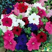 Петуния Уникум смесь цветов 100+ семян.