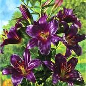 Собирайте лоты!! лилия дерево-гигант Purple Prince. Эксклюзив.Цвет реальный!!