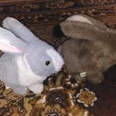 интерактивные Кролики - это не только ценный мех...