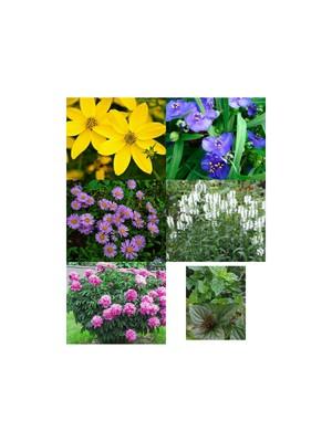 Мега лот!!! 5 шт. набір багаторічних квітів одним лотом+ два сорти м