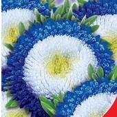Семена Астры Суприм Биколор помпонная или Голубой вихрь. Пачка на выбор.