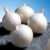 Семена лука Белая королева. Не острый. Для вкусных салатов.