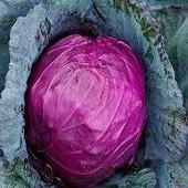 """Капуста краснокачанная """" Рубин"""". Стабильность урожая!!! Лечебные свойства!!! До 2025"""