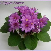 Rob's Zipper Zapper -вкорінений листочок вже з діткою