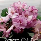 Tomorrow's Pink Ice - вкорінений листочок
