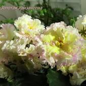 ЛЕ-Золотая Хризантема- вкорінений листочок