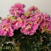 Sweet Lady Love - вкорінений листочок