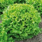 Салат Гранд Рапидс 50+ семян