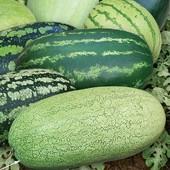 Смесь огромных длинных сахарных абузов. В упаковке 100 семян!!!!